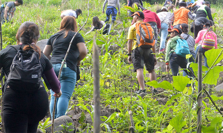 tree-growing-festival